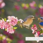 تقویم خرداد ماه ۱۳۹۸ را از آچارباز دانلود کنید
